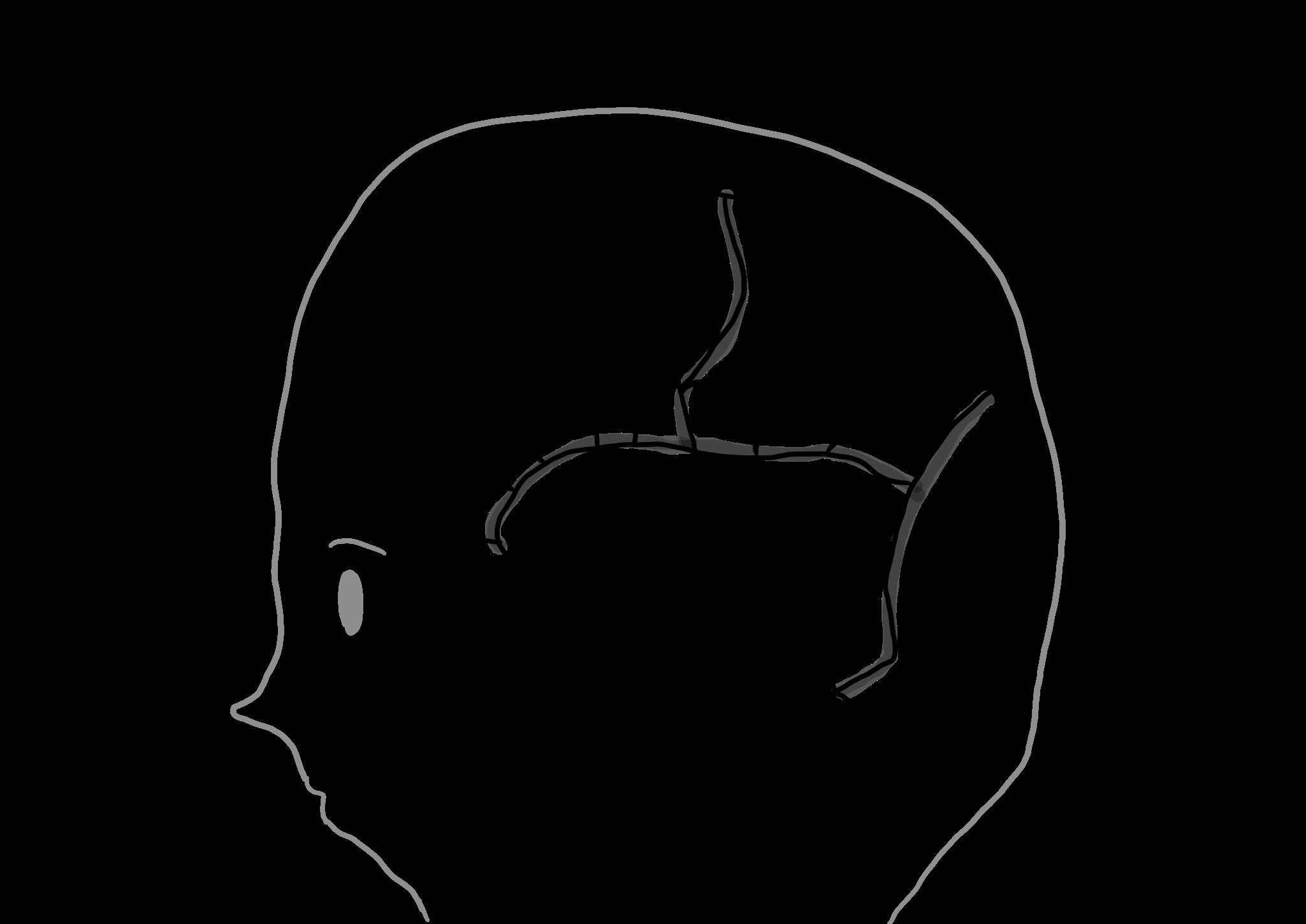 脳番地の地図の画像