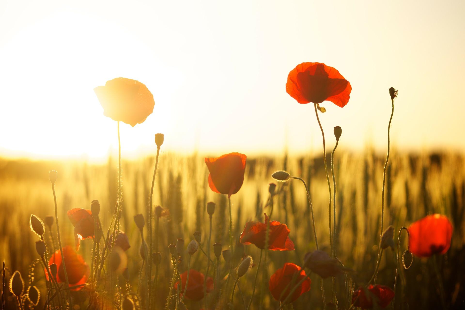 夕日と花の画像