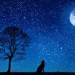 【☆】いい夢を見る方法。寝る前の3つの習慣【睡眠導入】