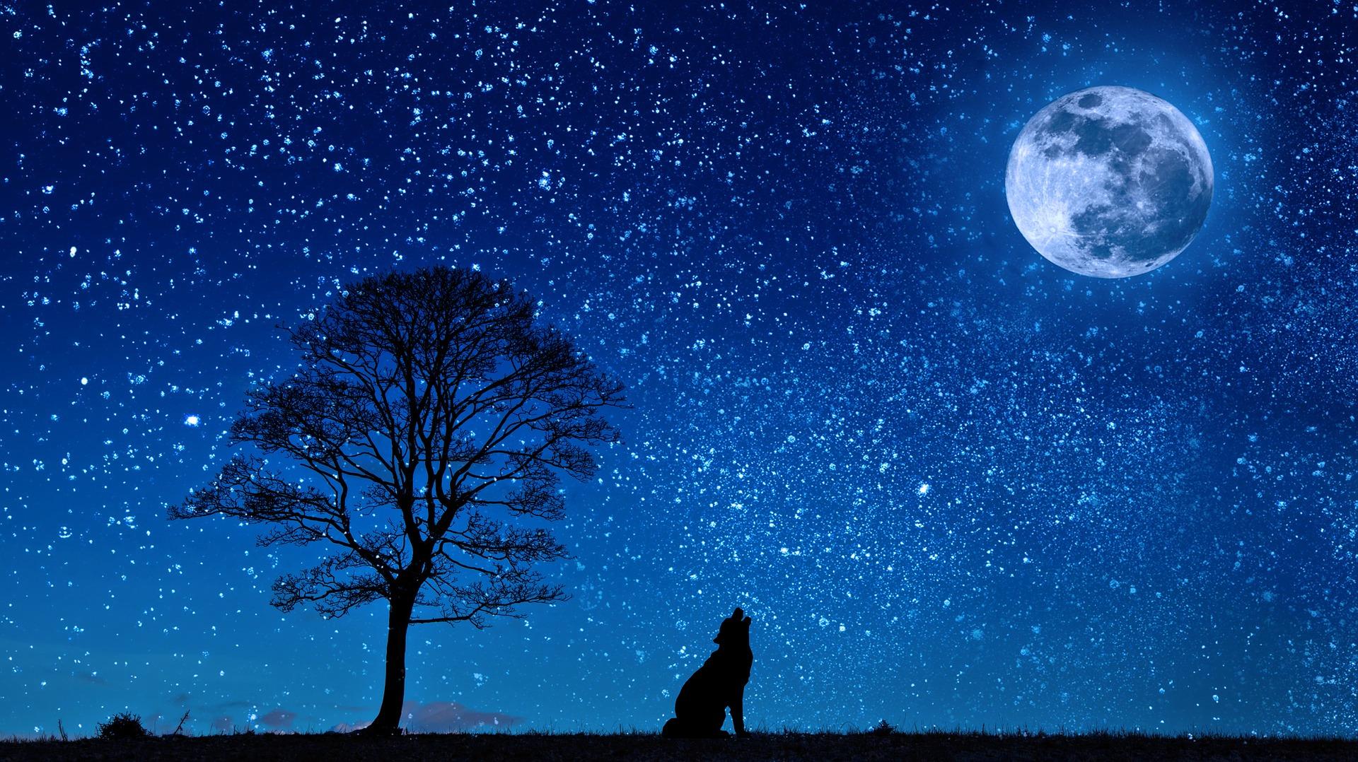 狼と月の画像