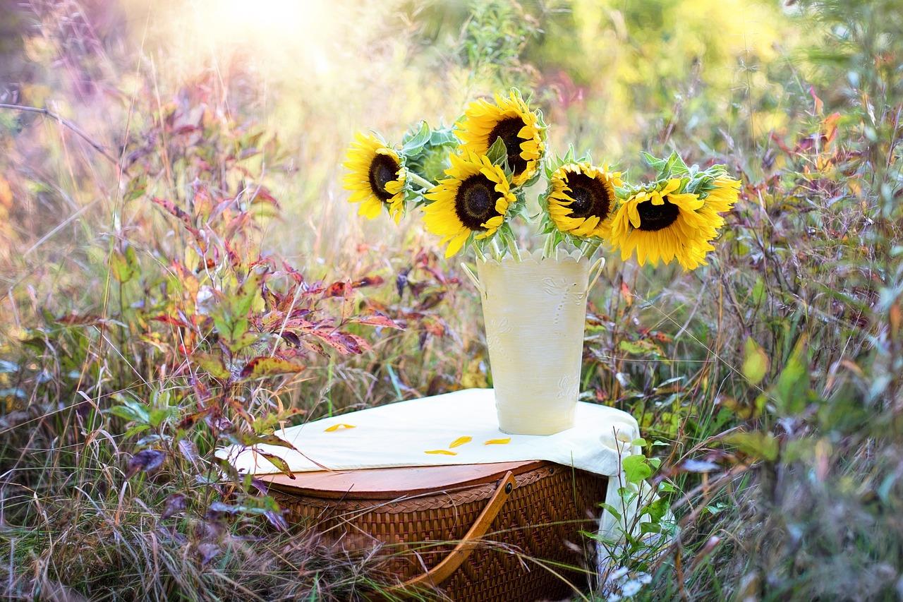 ひまわり 向日葵
