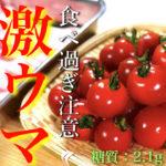 【食べ過ぎ注意の激ウマ串焼き!】超ジューシー☆あり得ないほどお酒が進む♬「ぷちトマトの豚バラ巻き」の作り方